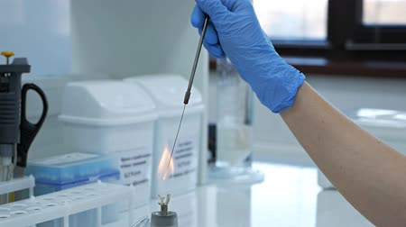 Glass alcohol burner burns on a table in a laboratory. Heated tubes and flasks. Fire and ampoule with medicine. Burner and human hands. Research laboratory.Bacteriological culture Wideo
