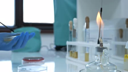 organizma : Glass alcohol burner burns on a table in a laboratory. Heated tubes and flasks. Fire and ampoule with medicine. Burner and human hands. Research laboratory.Bacteriological culture Stok Video