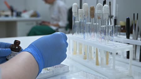farmacologia : The creation of a biological drug that provides activation of acquired immunity to a specific disease. Female researcher using test tubes to fill a micropipette in a large modern laboratory. Stock Footage