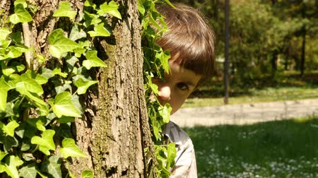 вокруг : A little boy peeks around a tree trunk. Hide and seek game. Recreation outdoors for kids