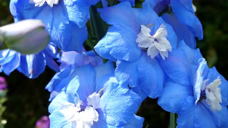 waggle : Beautiful blue flowers waggle from the wind