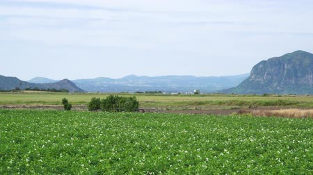 plain : Scenery of potato farm field with Mt. Sanbangsan and Mt. Hallasan in Daejeong-eup, Jeju island, Korea.