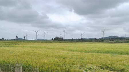 ripen : yellow barley field with wind generators and dynamic clouds in Jeju island, Korea.