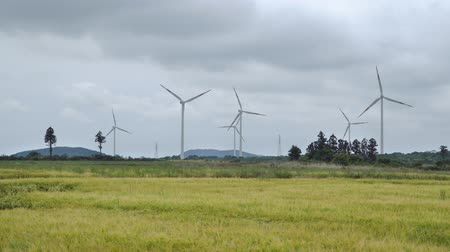 shaking wind : yellow barley field with wind generators and dynamic clouds in Jeju island, Korea.
