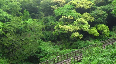 handrails : wooden bridge and thick forest at the entrance of Eongtto waterfall in Jeju island, Korea. Stock Footage