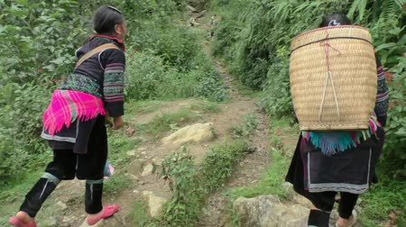 north vietnam : Hmong Ethnic women walk through the forest to village near Sapa, Vietnam -  09.08.2014 Stock Footage