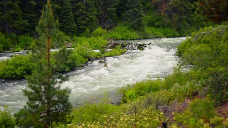 dobrar : Deschutes river near Bend, Oregon rushing past a tree