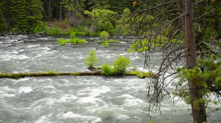 dobrar : Pristine Deschutes River passing through a lush green forest near Bend, Oregon