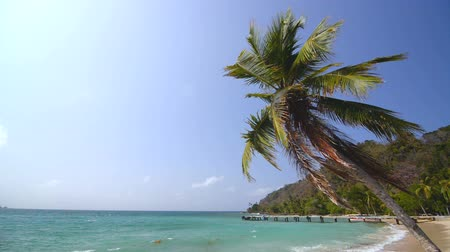 Колумбия : View of a palm tree on the beautiful tropical beach in La Miel, Panama near the border of Colombia