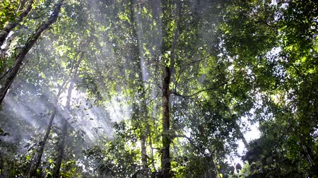 amazonka : Rays of light passing through rising smoke in the Amazon rain forest in Peru Wideo