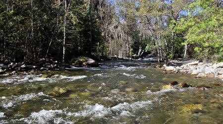 creek : South Piney Creek near Story, Wyoming Stock Footage
