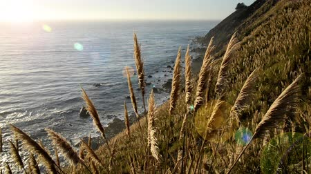 Калифорния : Lens flare and pampas grass blowing in the window over the Pacific Ocean in Big Sur on the California coast