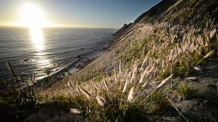 pacífico : Pampas grass blowing in the window with the sun setting over the Pacific Ocean in Big Sur, California