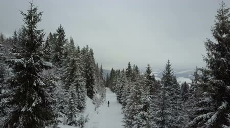 karpaty : Aerial shot of Snowboarder descending among trees. Birds Eye View Above White Powder Snow - Winter Extreme Sports, Freeride.