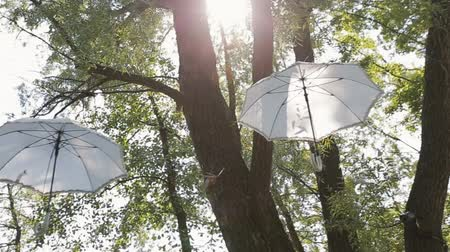 perspective : Bottom view of white Umbrellas hanging in the air in a park or a forest. Steadicam shot.