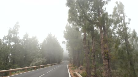 virgin forest : POV driving through a pine forest in mountains. Point of view driving, view from inside the car driving through a mountain forest road in fog and mis
