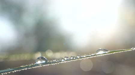 hdtv : Fantastic beautiful raindrops dew sparkling in sun on leaves of fresh green grass Stock Footage
