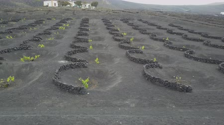 krater : Drone shot of vineyards on black volcanic soil in Lanzarote. Aerial scenic view of Wine-growing in La Geria on the island of Lanzarote, Canary Islands, Spain, Europe.