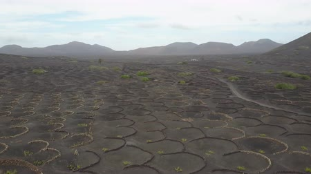 gat in muur : Aerial scenic view of vineyards on black volcanic soil of Lanzarote, Canary Islands, Spain, Europe. Stockvideo