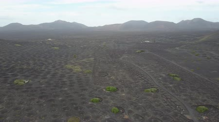 кратер : Drone shot of vineyards on black volcanic soil in Lanzarote. Aerial scenic view of Wine-growing in La Geria on the island of Lanzarote, Canary Islands, Spain, Europe.