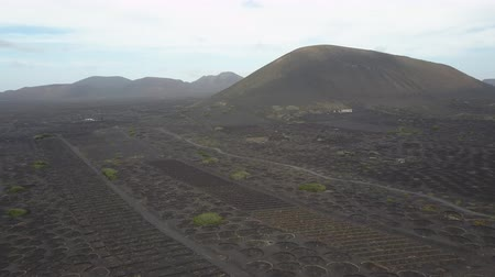vinná réva : Drone shot of vineyards on black volcanic soil in Lanzarote. Aerial scenic view of Wine-growing in La Geria on the island of Lanzarote, Canary Islands, Spain, Europe.