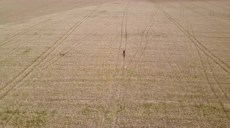 Aerial tracking shot of a man with bicycle walking in the centre of a wheat field during the day.
