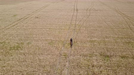 Aerial tracking shot of a man riding a bicycle in the centre of a wheat field during the day. Dostupné videozáznamy