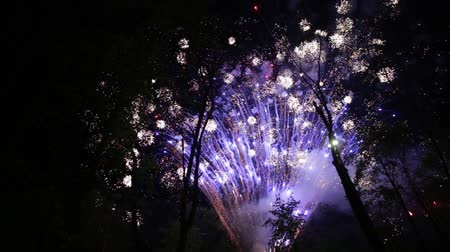 comemoração : Colorful fireworks in the park with silhouettes of trees in the foreground. Stock Footage