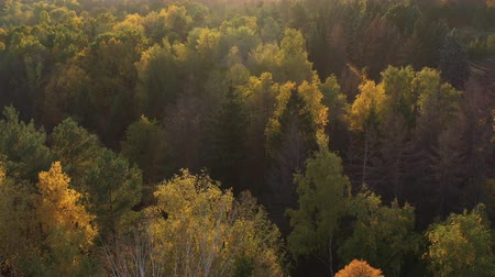 estetický : Epic aerial flight over the autumn forest at sunset. Aesthetics of autumn nature. Sunlight on the leaves. Flying over the natural landscape. Aesthetic travel video footage. Dostupné videozáznamy