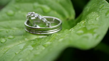 новобрачный : Wedding rings on a green sheet wet after rain. Wedding summer details and accessories close-up. Time before the wedding ceremony in nature. Jewelry made of silver or platinum with diamonds.