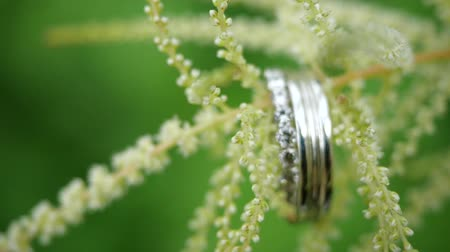 tartmak : Silver wedding rings weigh on a green flower. Beautiful wedding rings weigh on the stalk of a beautiful flower on a green background. Wedding gifts and sweet romance. The wedding of husband and wife. Stok Video