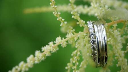 trouwen : Close-up view of wedding rings hanging on a beautiful flower. Pair of beautiful wedding rings on a plant. Wedding gifts and sweet romance.