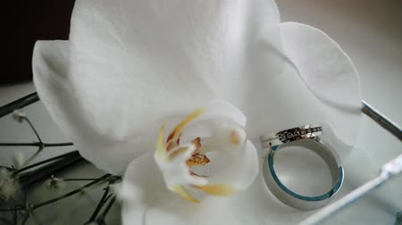 orchideeen : Close-up view of a white opened orchid and a pair of wedding rings for a wedding ceremony for the bride and groom. Two elegant silver rings lie in a box on the table for the wedding day of the party.