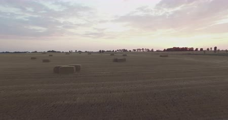 alargamento : AERIAL Flying over field with hay bales at sunset. Car Driving by