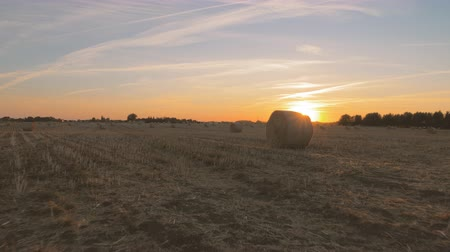 Harvested field with round bales of straw as sunset