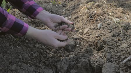 çiftçi : Farmer picking up dry soil in his hands. Male hands touching soil on the field. For concept as drought and climate change Stok Video