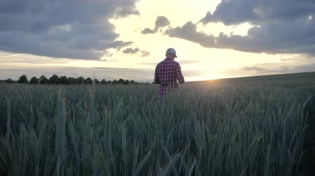 inspecionar : Modern male farmer inspecting his crop with a tablet computer in a field at sunset using programs to calculate the harvest