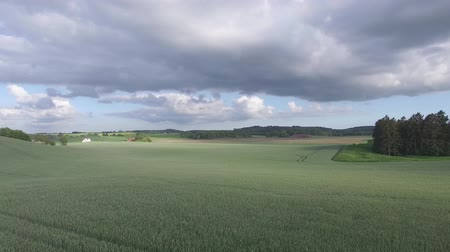 Drone view: flying over beautiful wheat fields in the rural countryside. Blue sky with clouds. Stockvideo