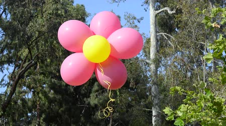 balonlar : Decorative balloons gathered in a bunch with ribbon are filled with helium and float against an outdoor setting during a party Stok Video