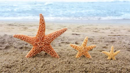 hvězdice : Conceptual video of three golden starfish in the sand overlooking a beautiful, turquoise ocean during summer holiday. Dostupné videozáznamy