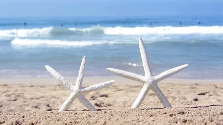 hvězdice : Two white tropical starfish in the sand overlooking a turquoise ocean with gentle waves in the distance. Focus is on the starfish.