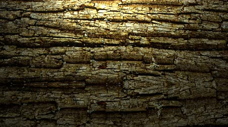 światłowód : A dark, grunge tree bark rolling surface with a subtle white spotlight accents the wood. Animation created primarily for use as a design element background. Wideo
