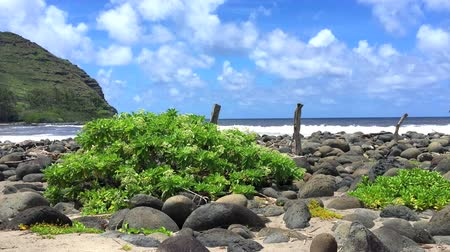 pěšina : A rocky shoreline in Hawaii highlights the lush nature of the islands driven in part by plentiful rainfall.