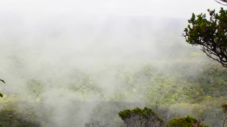 motivo : Clouds moving through Waimea Canyon in Hawaii show the reason why the islands are so wet.