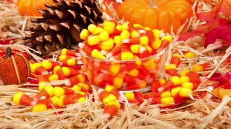selektif : A classic autumn theme pan of classic candy corn in a setting with pinecones, indian corn and fall leaves for use as a seasonal design element.