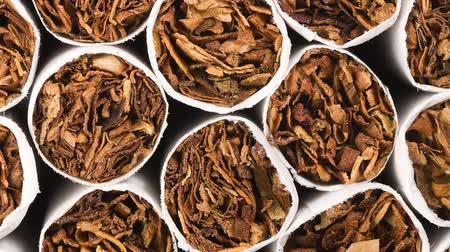 enrolado : A slow video pan over fresh, unlit cigarette tips shows the tobacco held within the rolled paper and packed tightly together