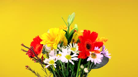 stokrotki : A beautiful bouquet of flowers consisting of daisies and pansies rotating against a yellow background Wideo