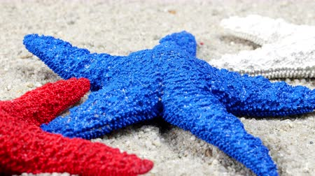 hvězdice : A conceptual video showing patriotic starfish on a sandy beach Dostupné videozáznamy