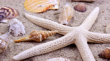 hvězdice : Close up of a rotating tropical starfish and seashell collection on a sandy beach