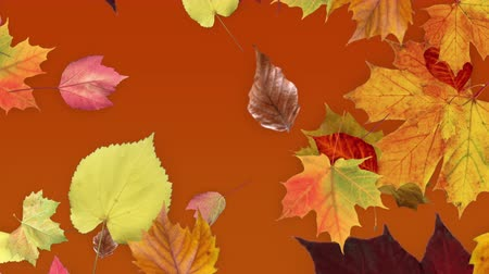 folhas : Multi colored leaves fall across a gold gradient to depict the beautiful foliage that forms in the fall season.